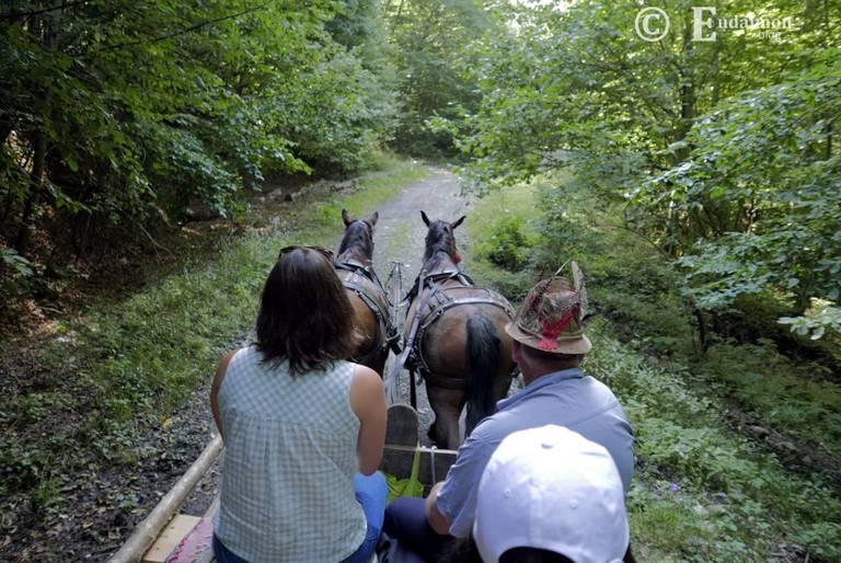 Wycieczka furmanką przez las i na górskie hale © Eudaimon blog