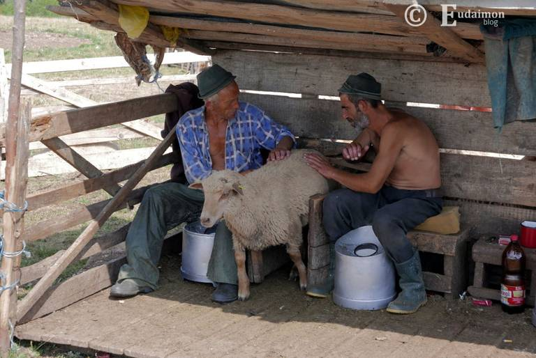 Pasterze doją owce © Eudaimon blog